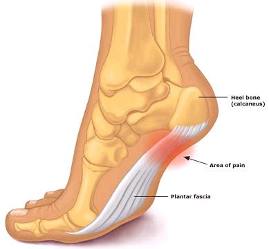 heel-bone